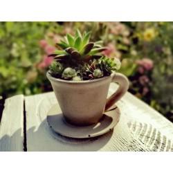 Kaffeetasse als Pflanztopf...